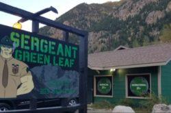 1556660529 Sergeant green leaf