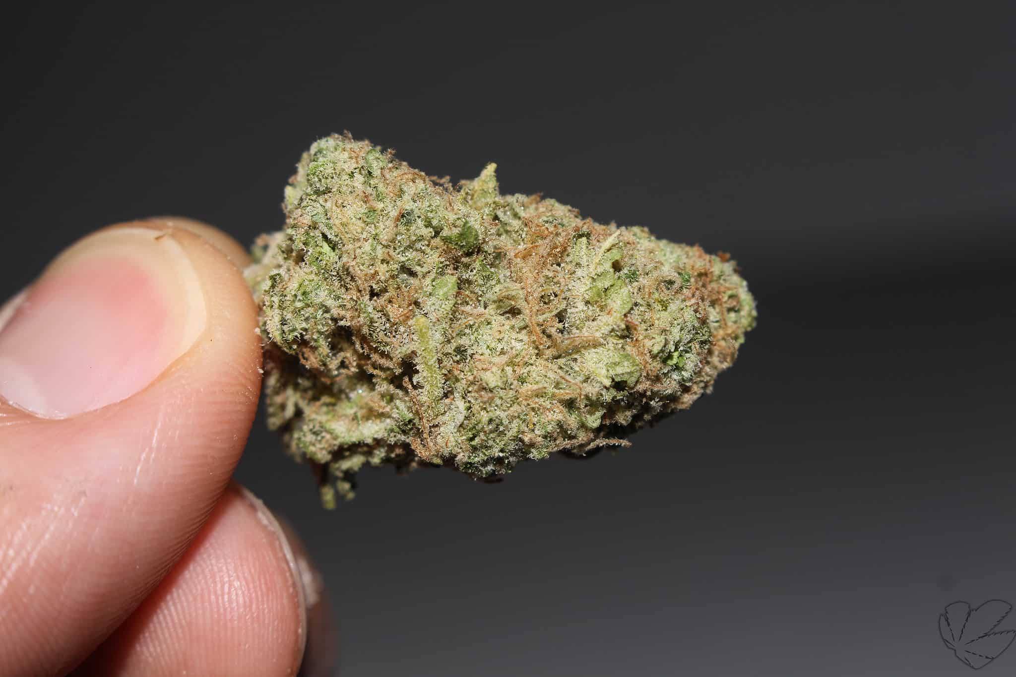 Picture of Critical Kush